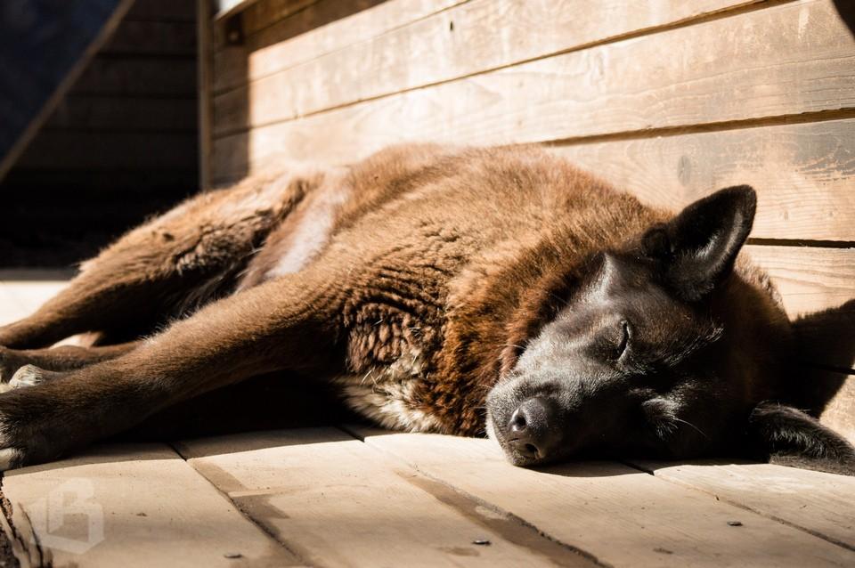 Собаки парка Монрепо