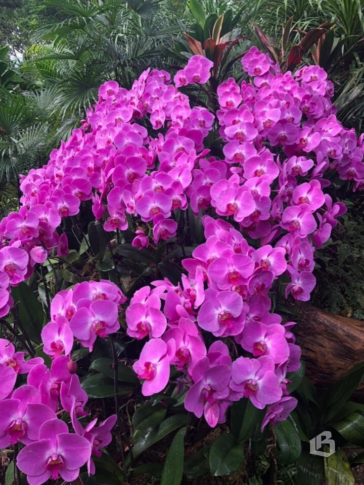 В саду орхидей на горе Цинсю