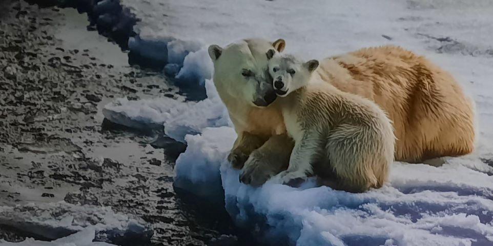 Фотовыставка «Материнство в дикой природе» проходит в ВЦ «Эрмитаж – Выборг»